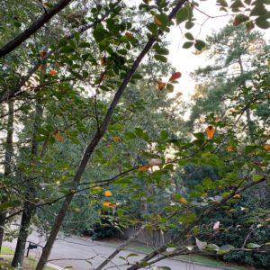 Fall Leaves - Faith Caffeine - Joelle Povolni